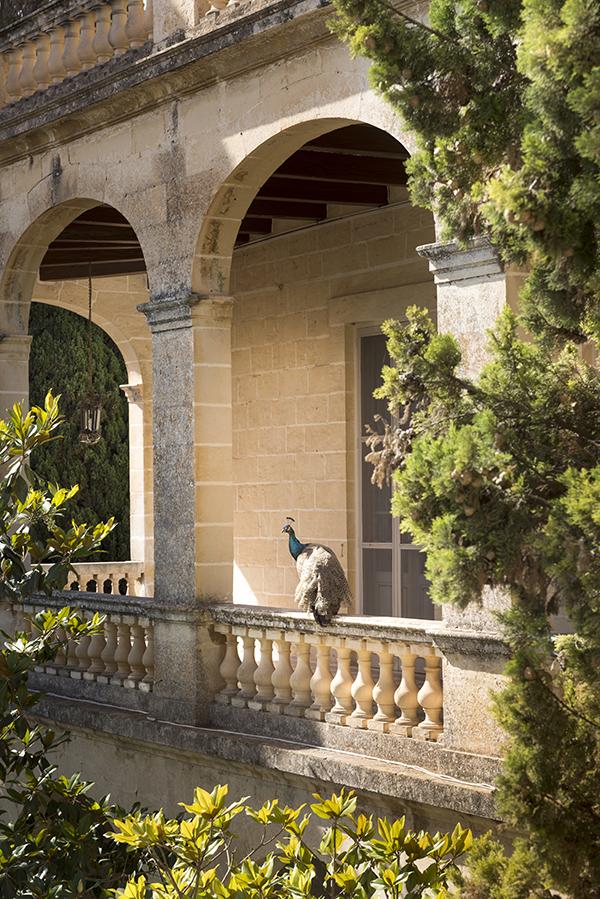 Bizzilla 'ta Malta  – Maltese Lace