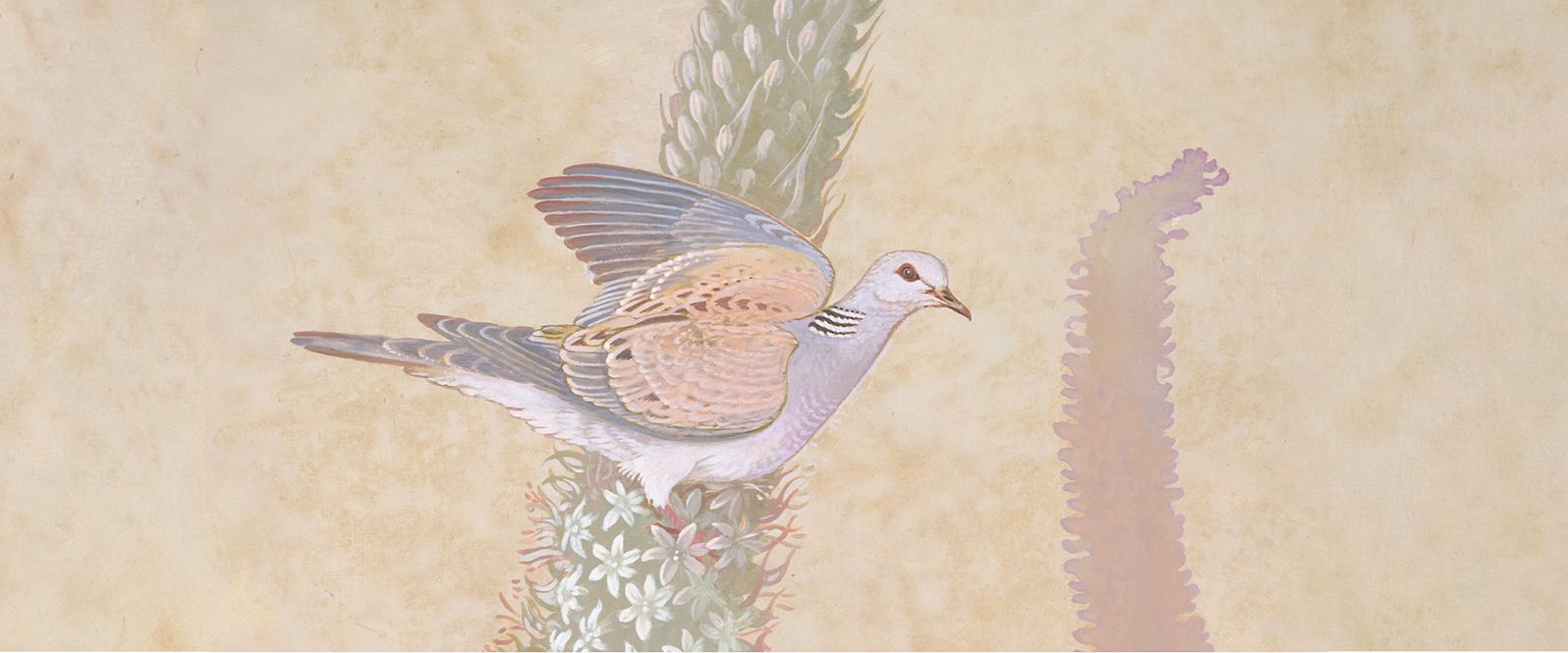 Malta Turtledove Agave Slider