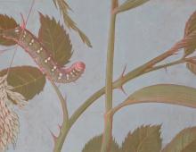 Plafondschildering detail rups - Peter Korver Amsterdam