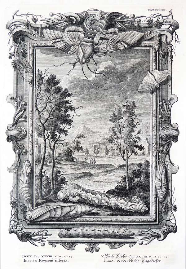 Johann Jakob Scheuchzer.