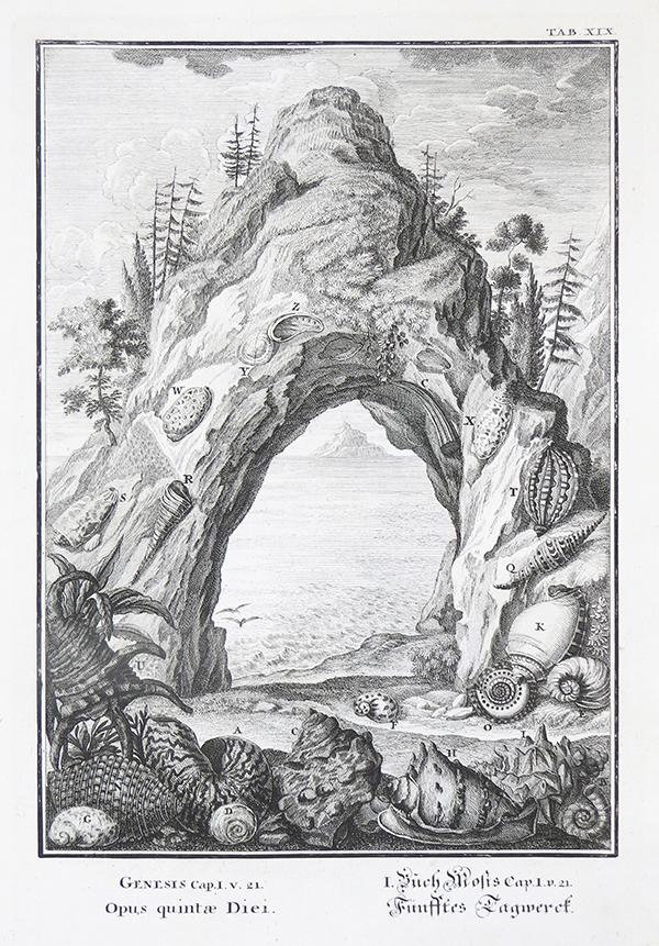 """Johann Jakob Scheuchzer -  \""""Opus quitae diei\"""" (Het werk van de vijfde dag,   Schelpen - Gen. 1:21). <p>    Kopergravure  uit  """"Physica Sacra"""" - Augsburg 1731  - (""""Geestelyke Natuurkunde"""" - Amsterdam 1735) -  Gravure; Johann August Corvinus (1683 /1738 ) Eigen collectie"""