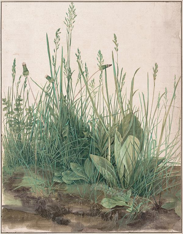 """Albrecht Dürer,  \""""Das große Rasenstück\"""", 1503 Aquarel - 40,8 × 31,5 cm Albertina - Wenen"""